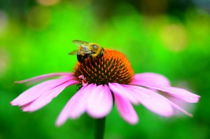 How to Cross-Pollinate Your Integrated Marketing - Jessica Ann Media